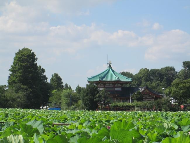 上野 真夏。。。